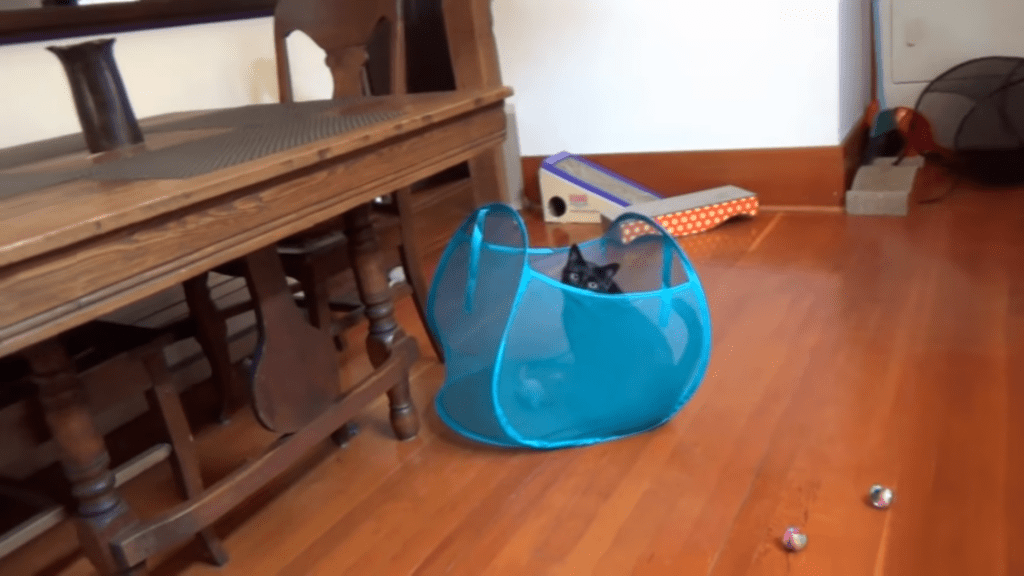 Black Cat vs Laundry Hamper