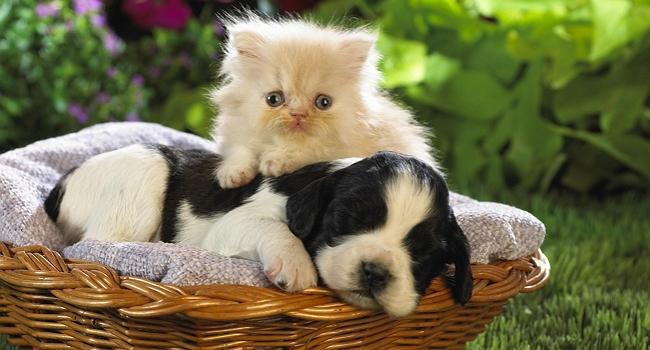 intro kittens & puppies