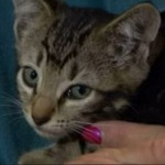Bus Driver Rescues Kitten Tossed from Moving Vehicle
