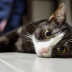 In New Jersey? Then Check Out the 2016 Cat Expo