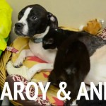 Flearoy & Andie: Best Buddies Looking for Home