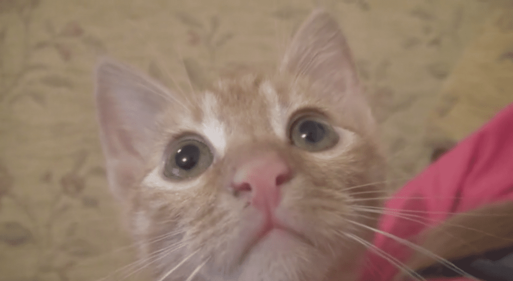 Smart Kitten Reacts to Silly Sounds