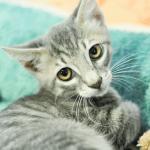 Meet Angry Kitten U's Adorable Grads