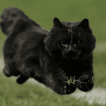 Average Cat Faster Than Fastest Humans, As Pepper Stadium Cat Proves