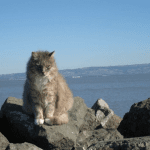 Love the Ocean? So Do These Bay Cat Beauties