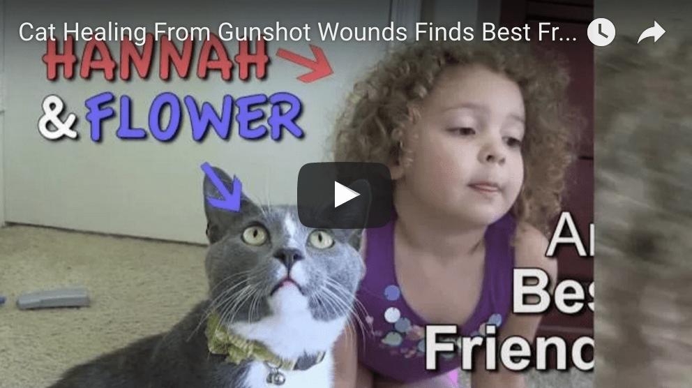 Flower Survives BB Gun Wound; Bonds With New BF
