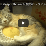 Peachy Video of Momo the Kitten Napping With Peach