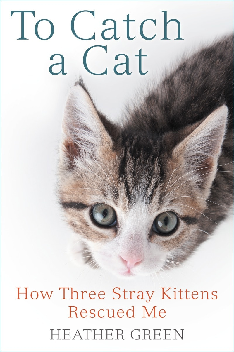 Author s New Book To Catch A Cat Charming & Funny Read
