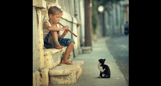Does Music Soothe the Average Cat? Who Really Knows…