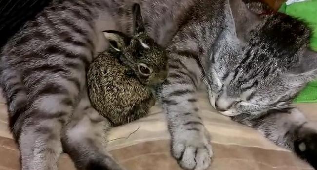 Baby Bunny Finds Kitty Buddy