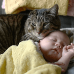 Cat Watches Over Baby