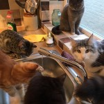 Manchester's First Cat Cafe Needs Volunteers to Test It