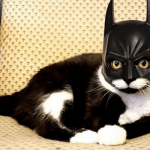 Cats With Super Powers for Good & Evil