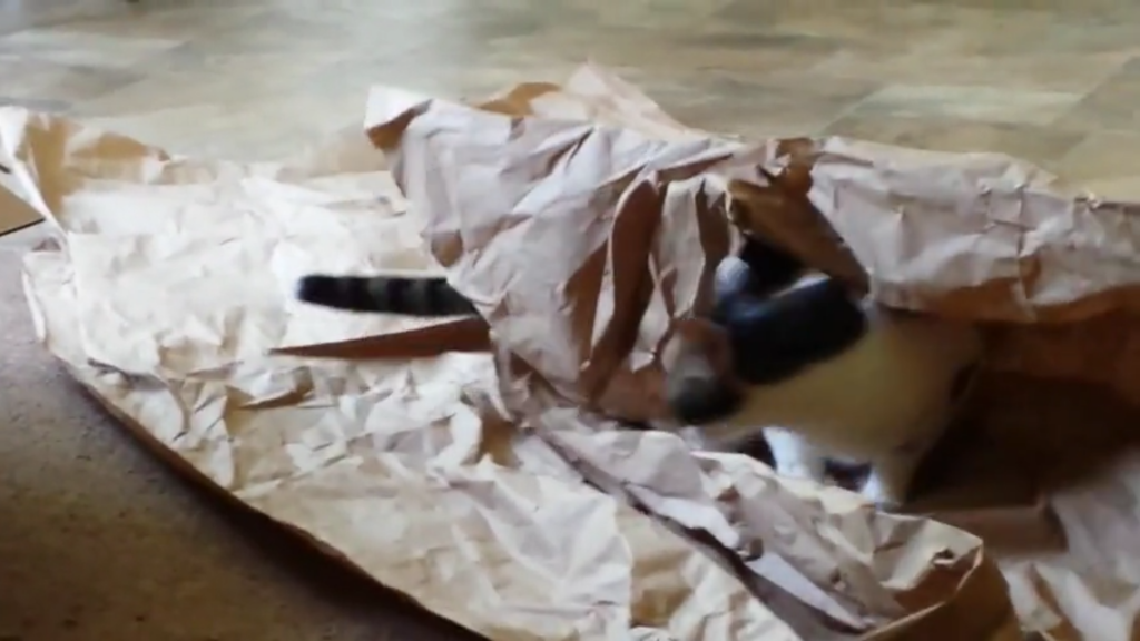 Cat Loves Playing With Packing Paper
