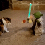Cat Plays With Yoda Toy