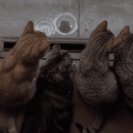 These 10 Cats Can't Stop Watching a Stray Kitten