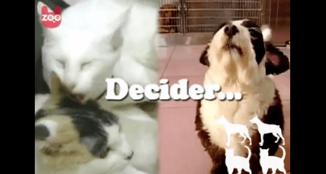 Does This Really Answer the Great Debate? Cats Vs. Dogs?