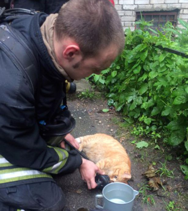Cat Rescued From Fire and Revived By Firefighters