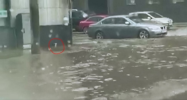 Cat Saved from Flood Waters by Good Citizen