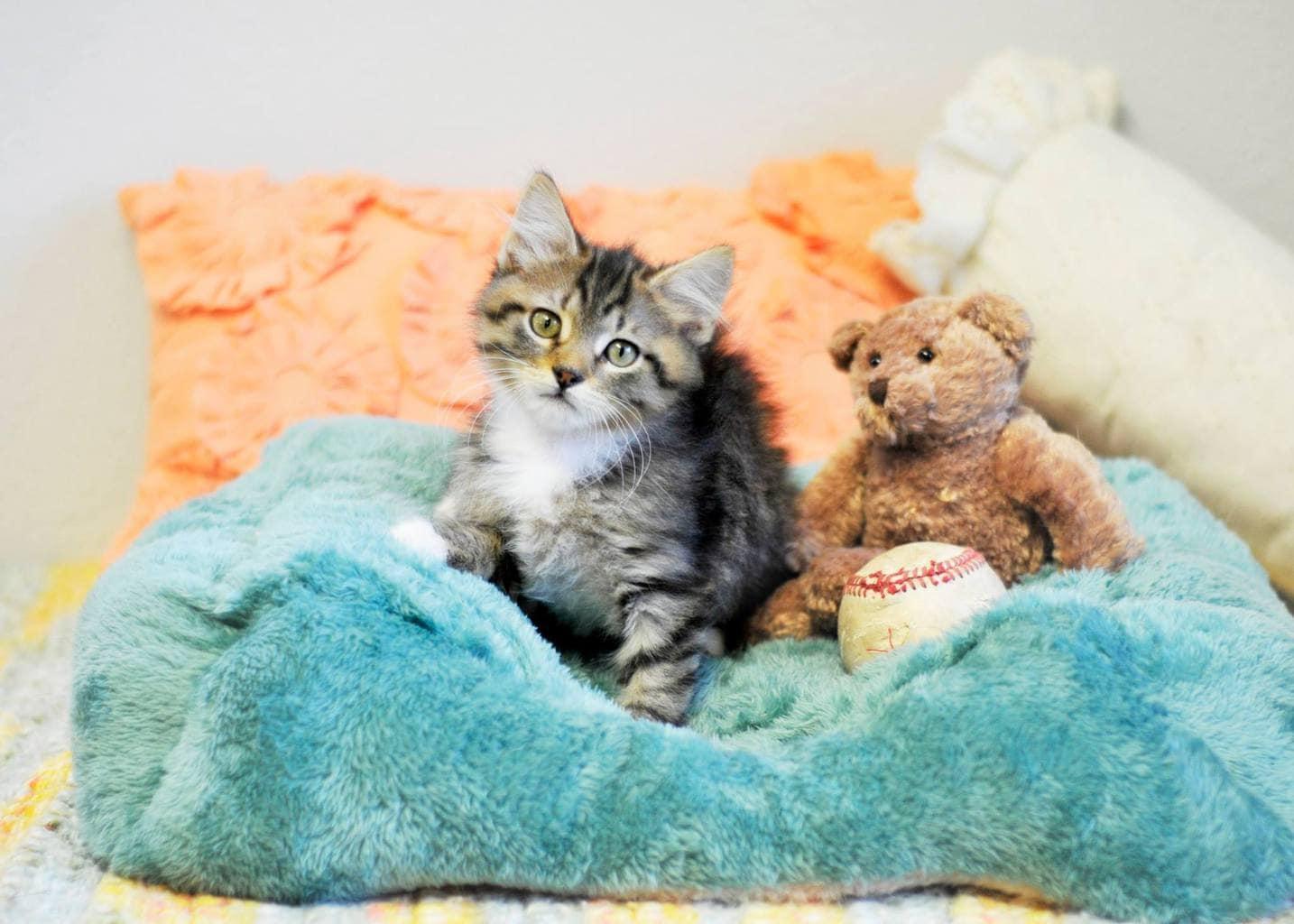 Feral Cat Kittens Socialize