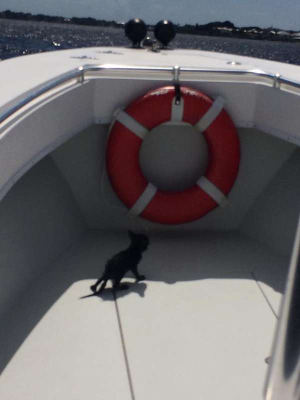 Kitten Rescued From Bridge Piling in St. Lucie River