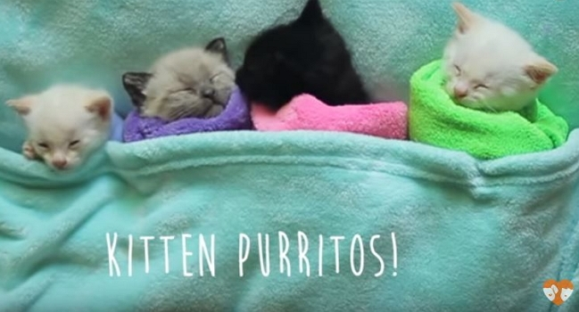 The Cutest Purritos – So Sweet You Could Almost Eat Them!