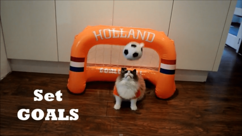 Workout Tips for Cats