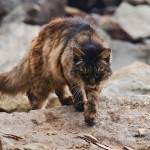 'Cat Wars' Book Calls for Elimination of Free-Ranging Cats