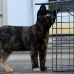 Newark Faces Serious Stray Cat Issues