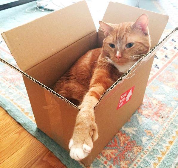 H&J box