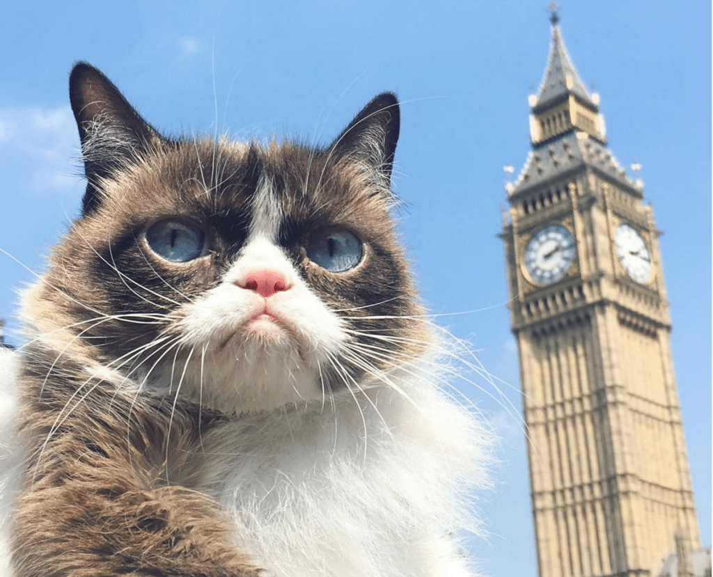 "Grumpy Cat Tours London,  Says ""Meh-ow"""