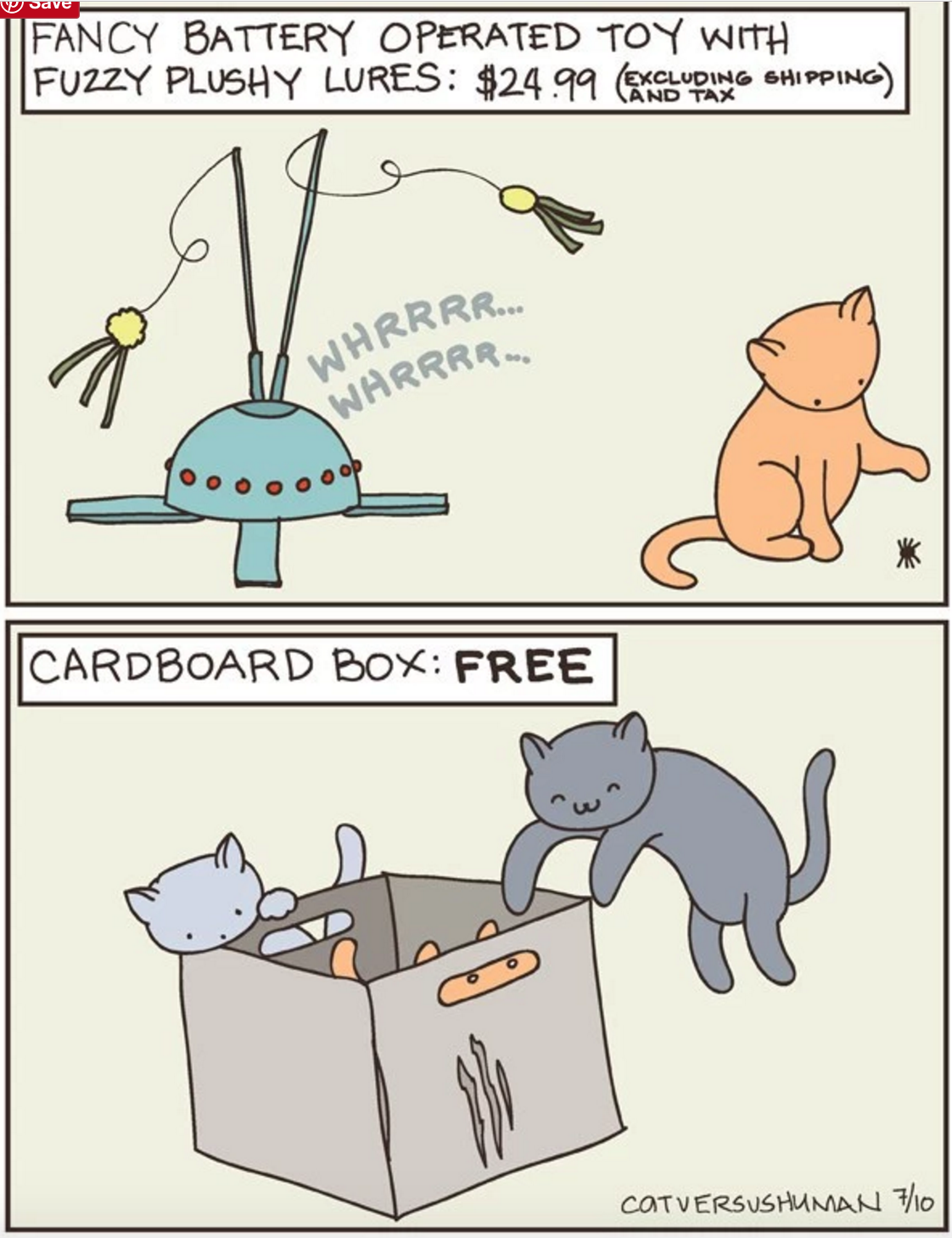 owning a kitten
