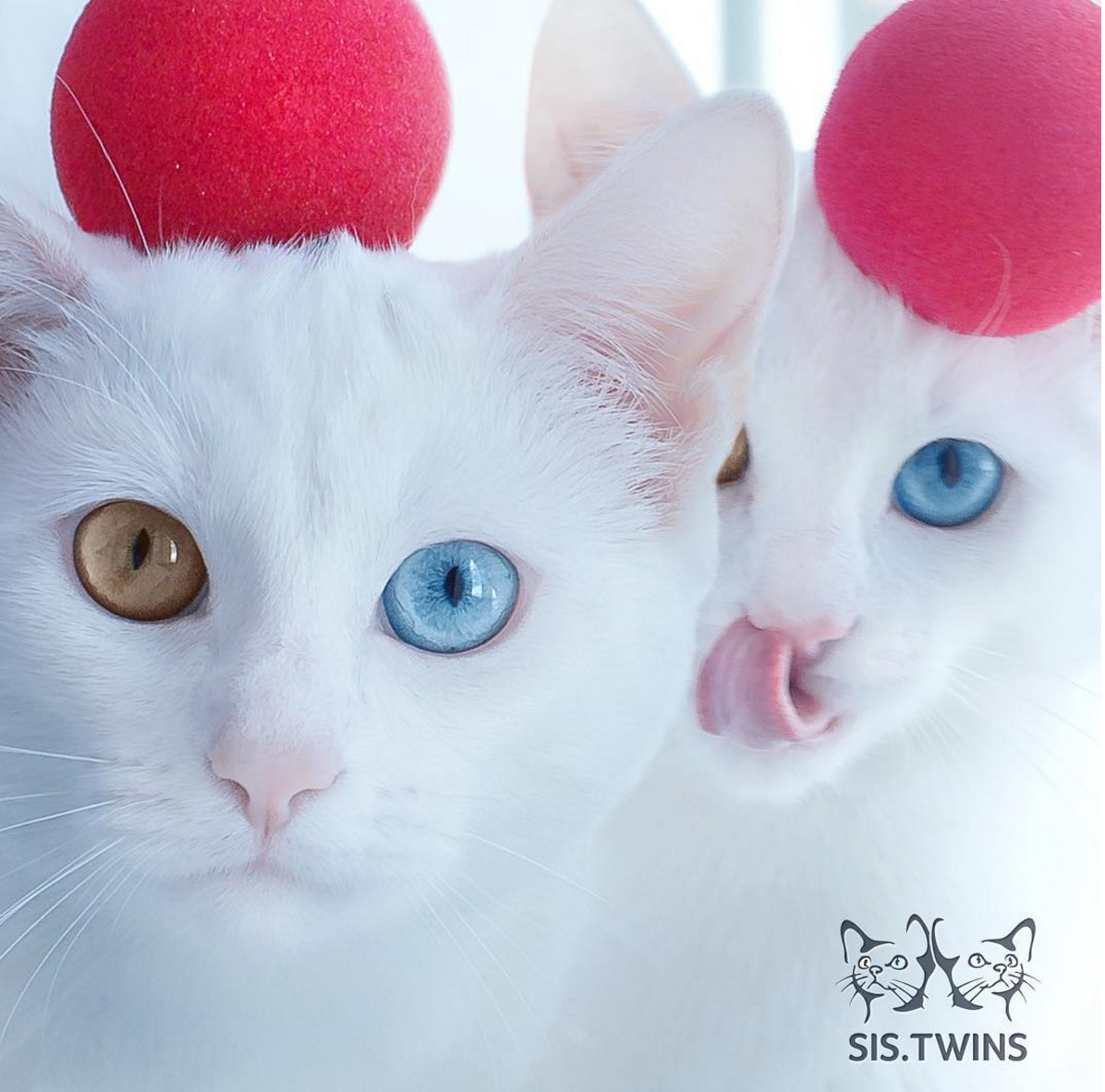 sis twins dazzle with jewellike eyes life with cats