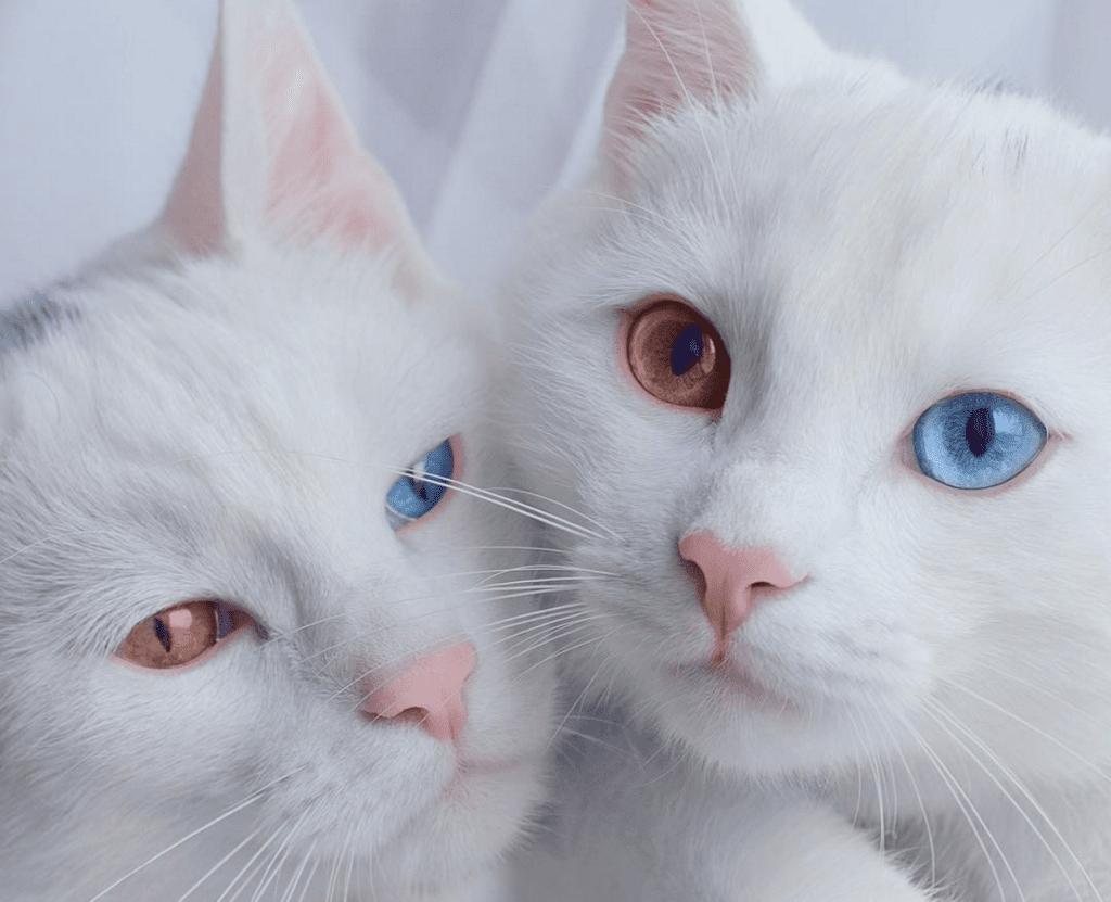 Sis Twins Dazzle With Jewel-like Eyes