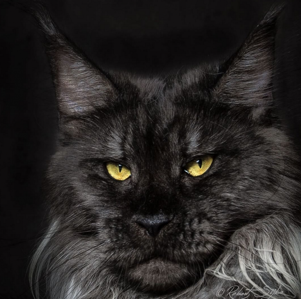 Black Cat Rescue California