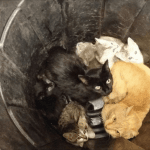 Kittens and Cats Treated Like Trash and Dumped