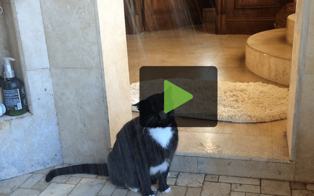 Cat Quenches Thirst In Shower Stall