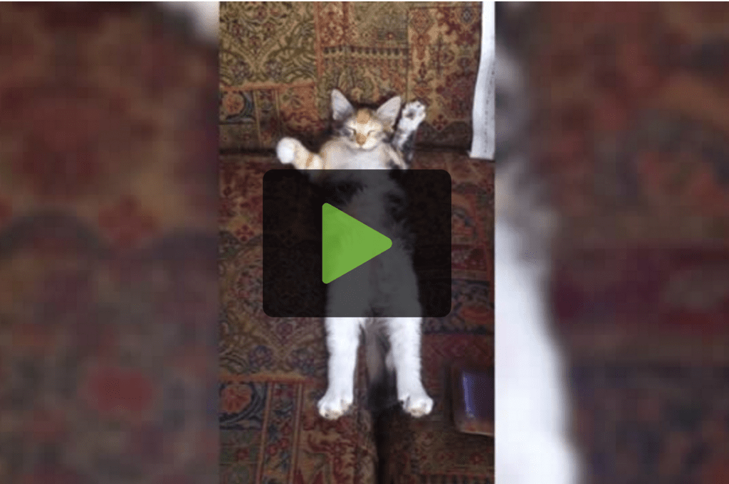 Funny Cats  & Humans Amuse Each Other