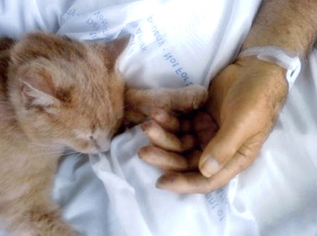 Vets in Need Find a Friend in Tom the Cat