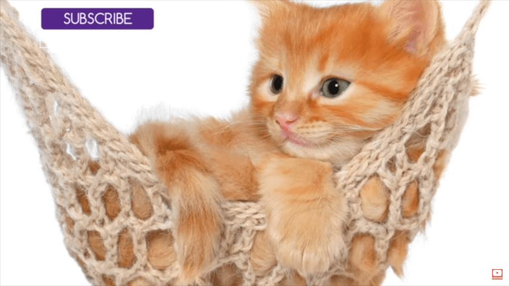 Magic Cat Music Lulls Your Cat To Sleep
