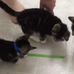 Mission Impossible: Cleaning With Kittens
