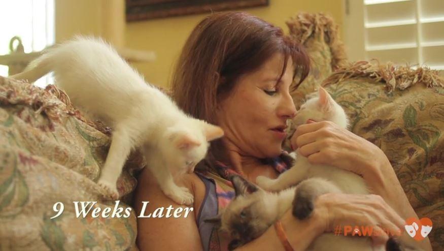 siamese kittens 4