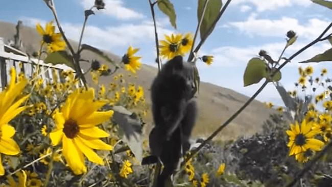 Kitten Stuck Up A…Sunflower?