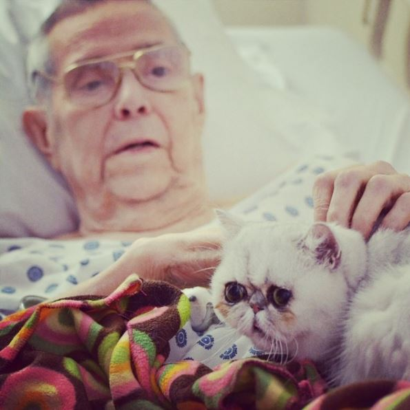 therapy-cat-mim
