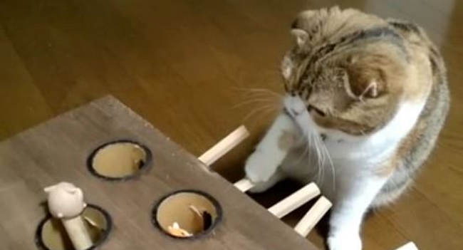 DIY Whack-a-Mole: Entertainment for Your Cat