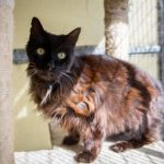 Abandoned Cat May Be Britain's Oldest Cat