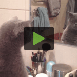 Cat Sees Reflection, Leaves, Comes Back to See If He's Still There