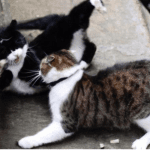 Moggies Battle Over Downing St. Turf