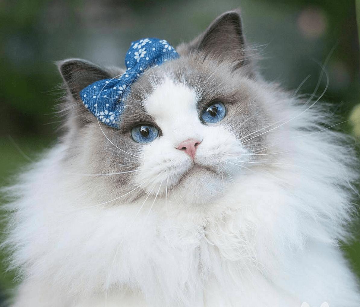 Princess Dee Cat