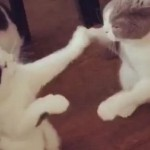 WARNING: Vicious Cat Fight Caught on Video…Sort Of
